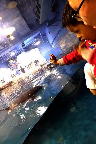 2012.05.01 墾丁之旅 海洋生物博物館 (22)