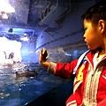 屏東海生館 企鵝餵食秀