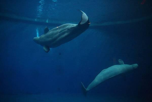 2012.05.01 墾丁之旅 海洋生物博物館 (47)