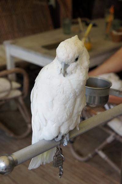 2012.09.09 兔子餐廳 (20)