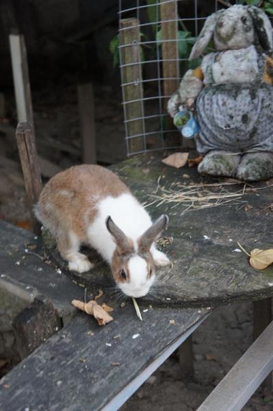 2012.09.09 兔子餐廳 (42)