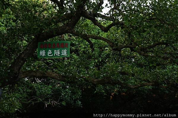 2012.12.02 安平老街 安平古堡  台江綠色隧道 (119)