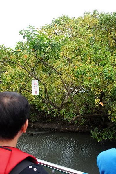 2012.12.02 安平老街 安平古堡  台江綠色隧道 (159)