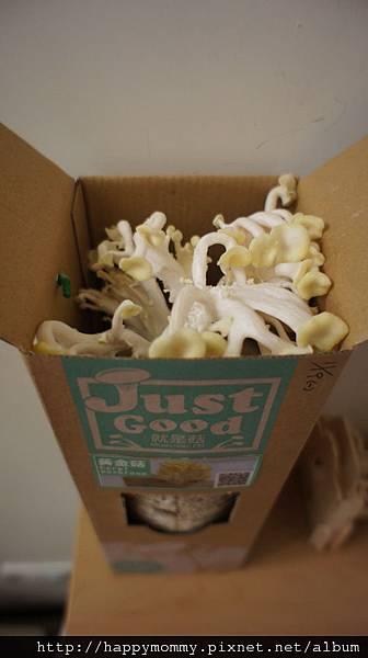 2012 在家種香菇 就是菇黃金菇 (4)