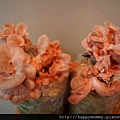2013 在家種香菇豐年農場 玫瑰菇 (8)