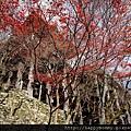 2012.12.24 京都穿和服到清水寺 (20)