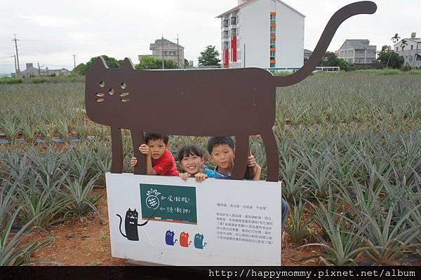 民雄旺萊山 土鳳梨酥 (33)