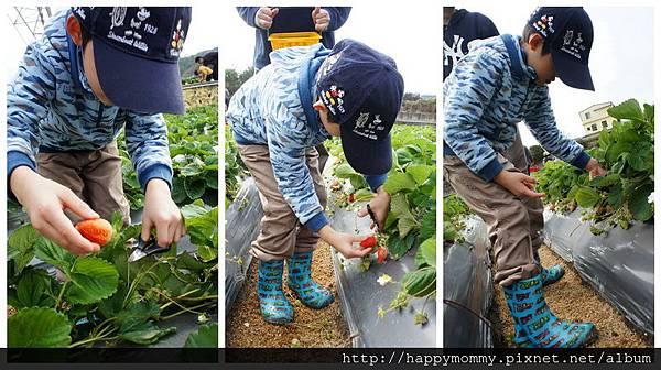 2013.12.28 大班班遊 苗栗採草莓 巧克力雲莊 草莓文化館 (1).jpg