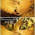 2015.08.29 台北市立動物園 教育中心 恐龍探索館 (26).JPG