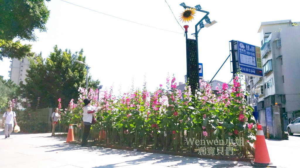 2017.04.29 士林街頭蜀葵花園 (17).jpg