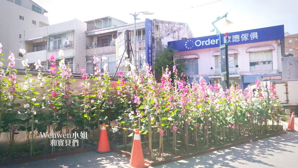 2017.04.29 士林街頭蜀葵花園 (37).jpg