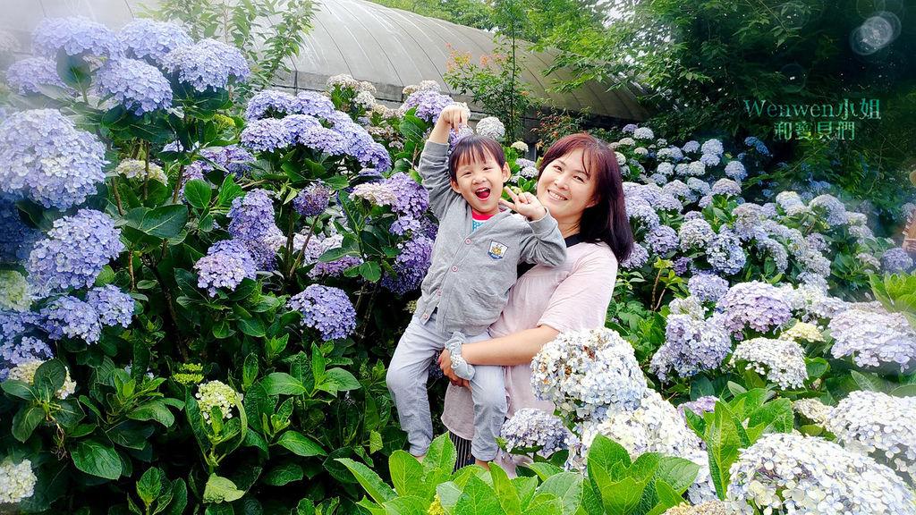 2018.06.03 陽明山竹子湖繡球花季  花與樹園藝 (20).jpg