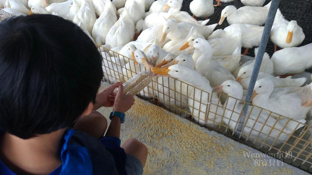2018.10.27 宜蘭甲鳥園餵鴨子 (21).jpg