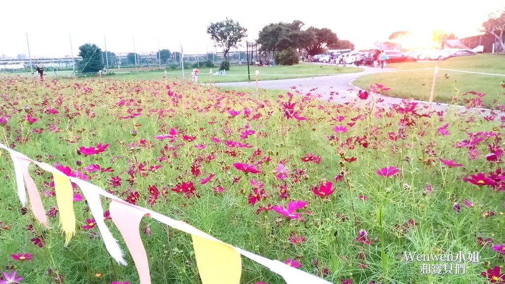 2019.09.22 台北向日葵花海 美堤河濱公園 (1).jpg