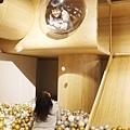 2020.富爸爸親子餐廳 (10).JPG