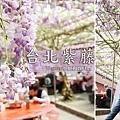 2020.03.21 台北竹子湖頂湖小鎮紫藤花 (1).jpg
