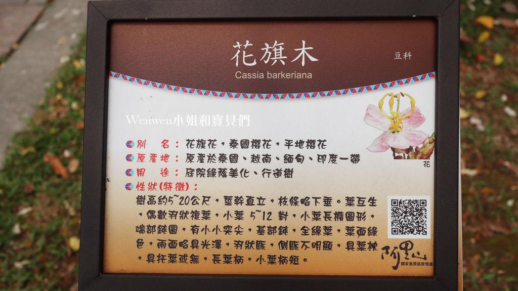 嘉義花旗木 觸口遊客中心 觸口梅花鹿園區 逐鹿傳說 (1).JPG
