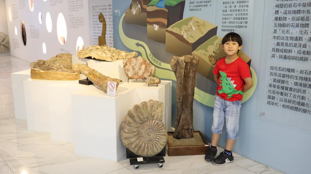 2020桃園親子景點 侏羅紀博物館 化石清修diy 恐龍化石 寶石原礦 (21).JPG