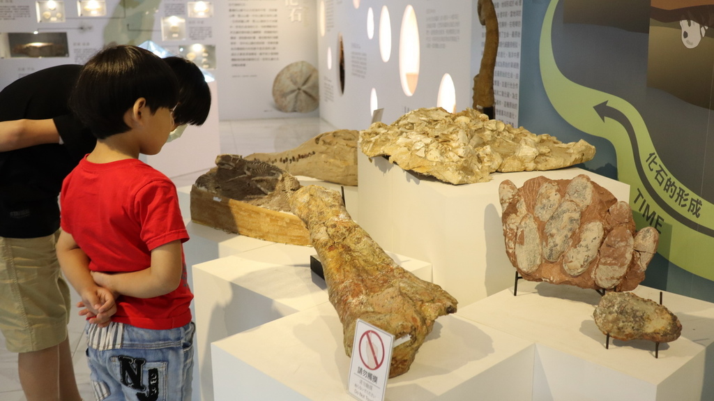 2020桃園親子景點 侏羅紀博物館 化石清修diy 恐龍化石 寶石原礦 (23).JPG