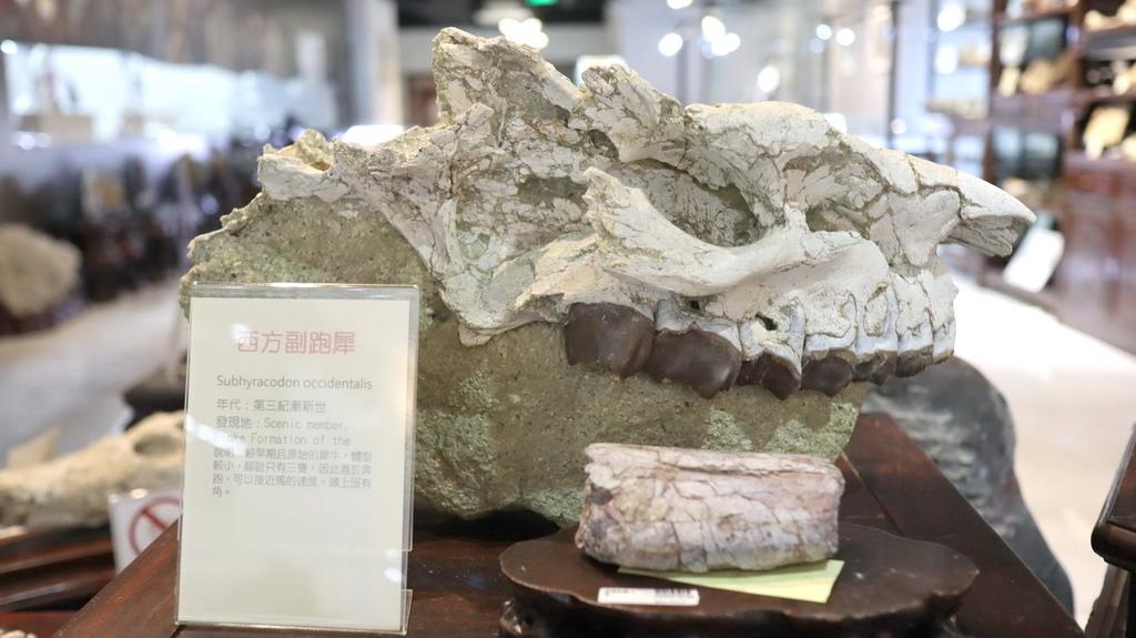 2020桃園親子景點 侏羅紀博物館 化石清修diy 恐龍化石 寶石原礦 (26)_exposure.JPG