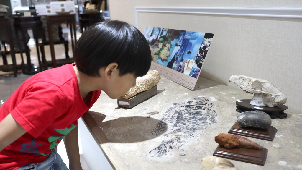 2020桃園親子景點 侏羅紀博物館 化石清修diy 恐龍化石 寶石原礦 (28)_exposure.JPG