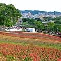 台北富良野花海 北投三層崎公園2.jpg