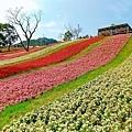 台北富良野花海 北投三層崎公園.jpg