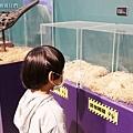 2021寒假展覽 諸羅紀恐龍水世界嘉義站 嘉義親子展覽室內景點 (20).JPG