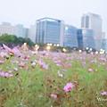 2021台北市美堤河濱公園花海 (1).jpg