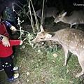 2021墾丁悠活渡假村 阿信巧克力農場 巧克力DIY夜探梅花鹿餵兔子 (8).JPG