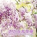 2021.03.20 台北紫藤花 竹子湖美食頂湖小鎮紫藤花季 (1).jpg