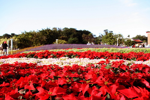 2010.12.01 花博圓山 (28).jpg