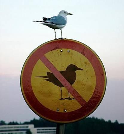 親愛的你,我說,你就是那隻鳥吧.jpg