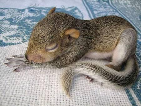 可愛的松鼠.jpg
