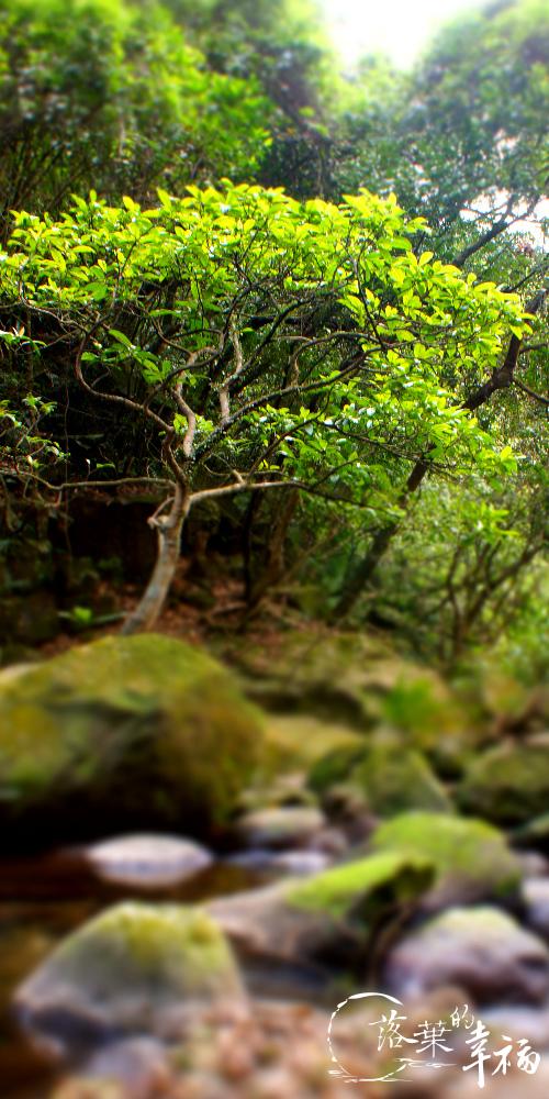 青山瀑布(15).jpg