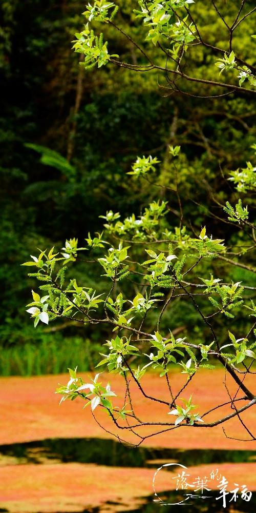 福山植物園(2).jpg