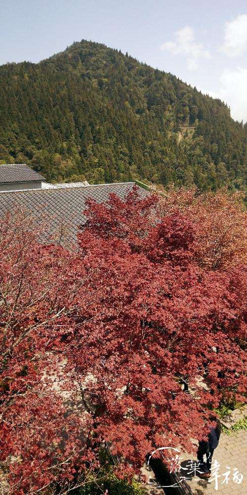 太平山(3).jpg