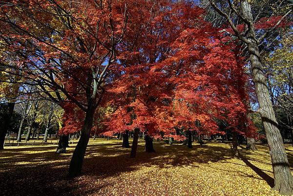 代代木公園(2).jpg