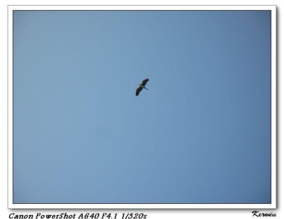 飛在天空的鳥