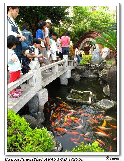 一旁的鯉魚池