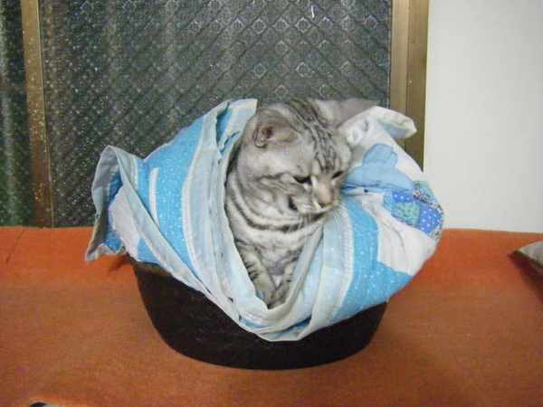 01/19/09 這是從宜蘭拿回來的盆子~ 給小笨睡剛好喔