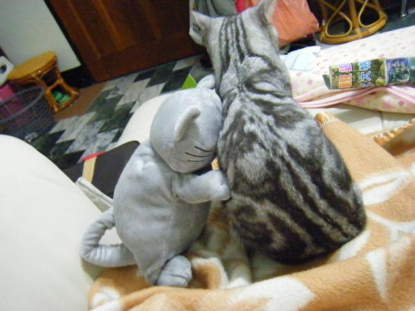01/18/09 小笨一點都不喜歡布偶貓