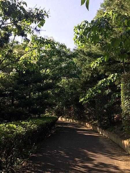 香格里拉-桐花步道
