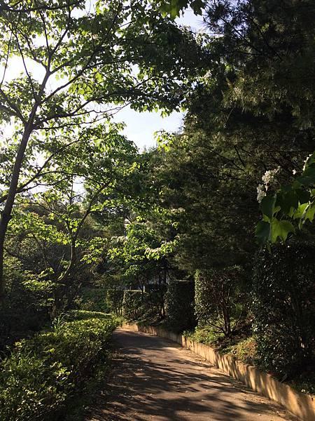 香格里拉-桐花步道2