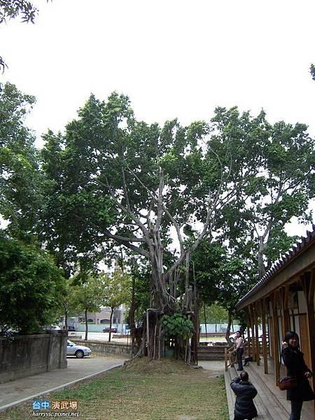 後面又一棵大樹