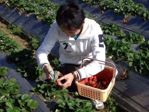 星閔採草莓