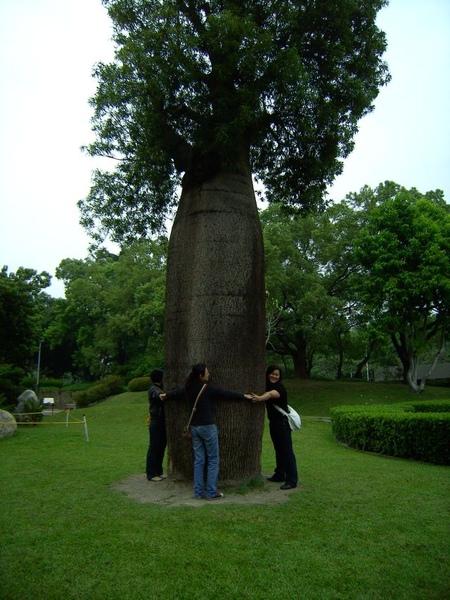 圍繞大樹,三人還圍不起來