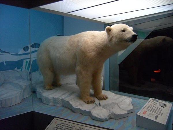 北極熊!!