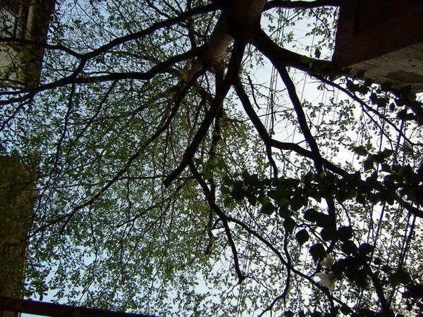 望向天空樹林間