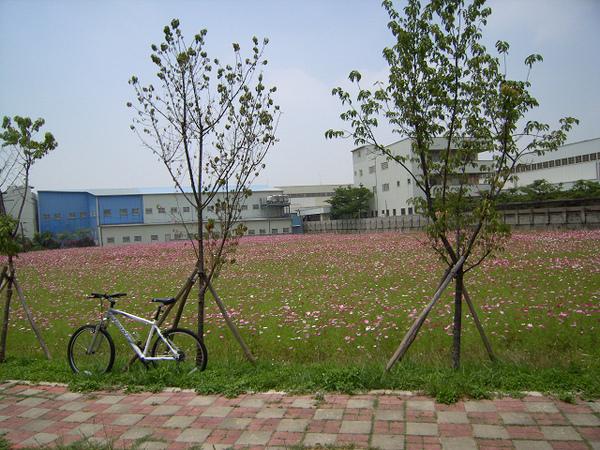 自行車道旁花海